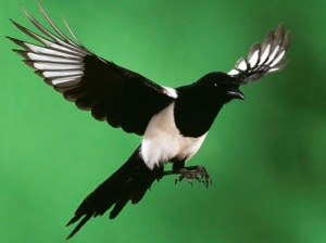 Marketing: The Magpie profession